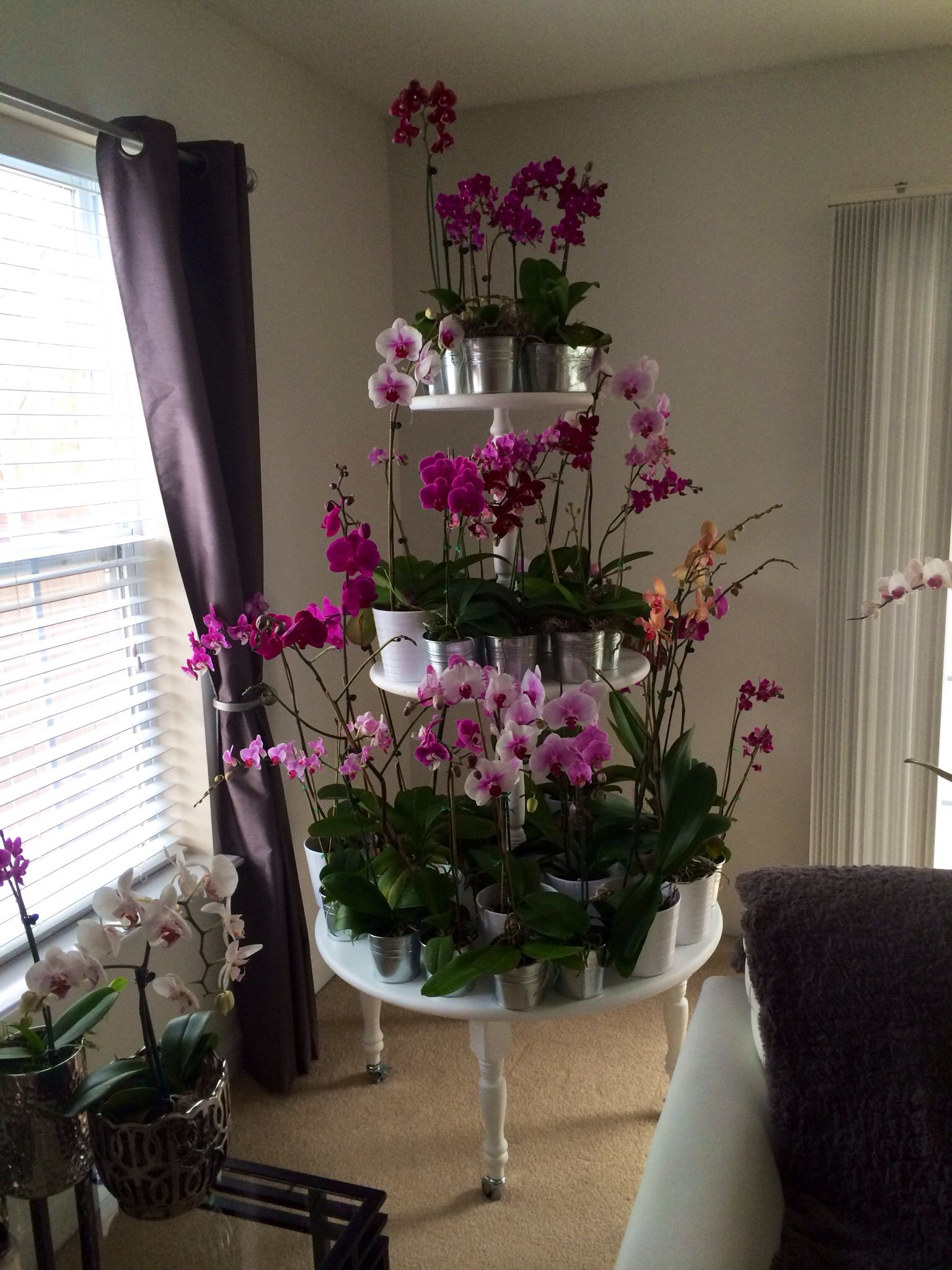 Orchid Plant Stand What A Wonderful Idea Flower Garden