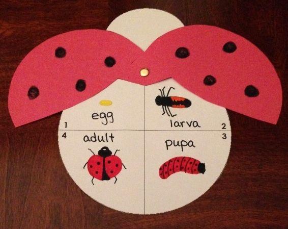 Ladybug Life Cycle Craft Life Cycle Craft Preschool Crafts