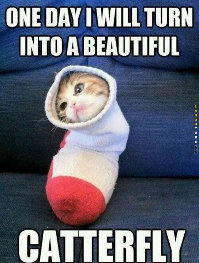 Top 19 Random Funny Memes Clean For Today Funny Animal Memes Animal Memes Funny Cat Memes