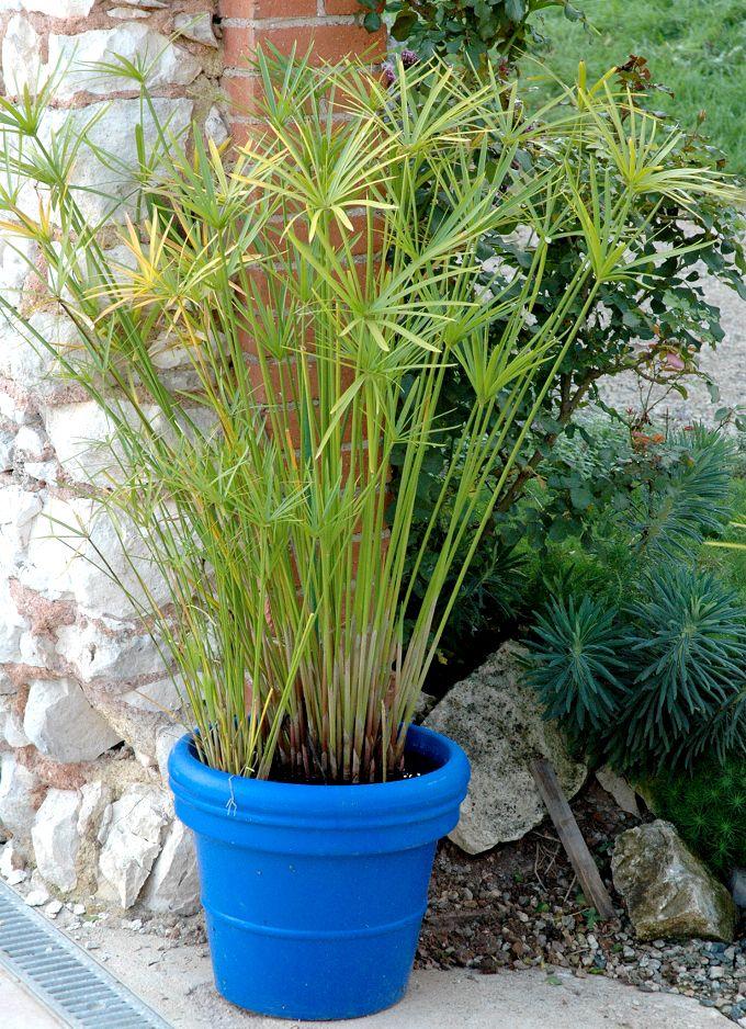 plante verte non toxique