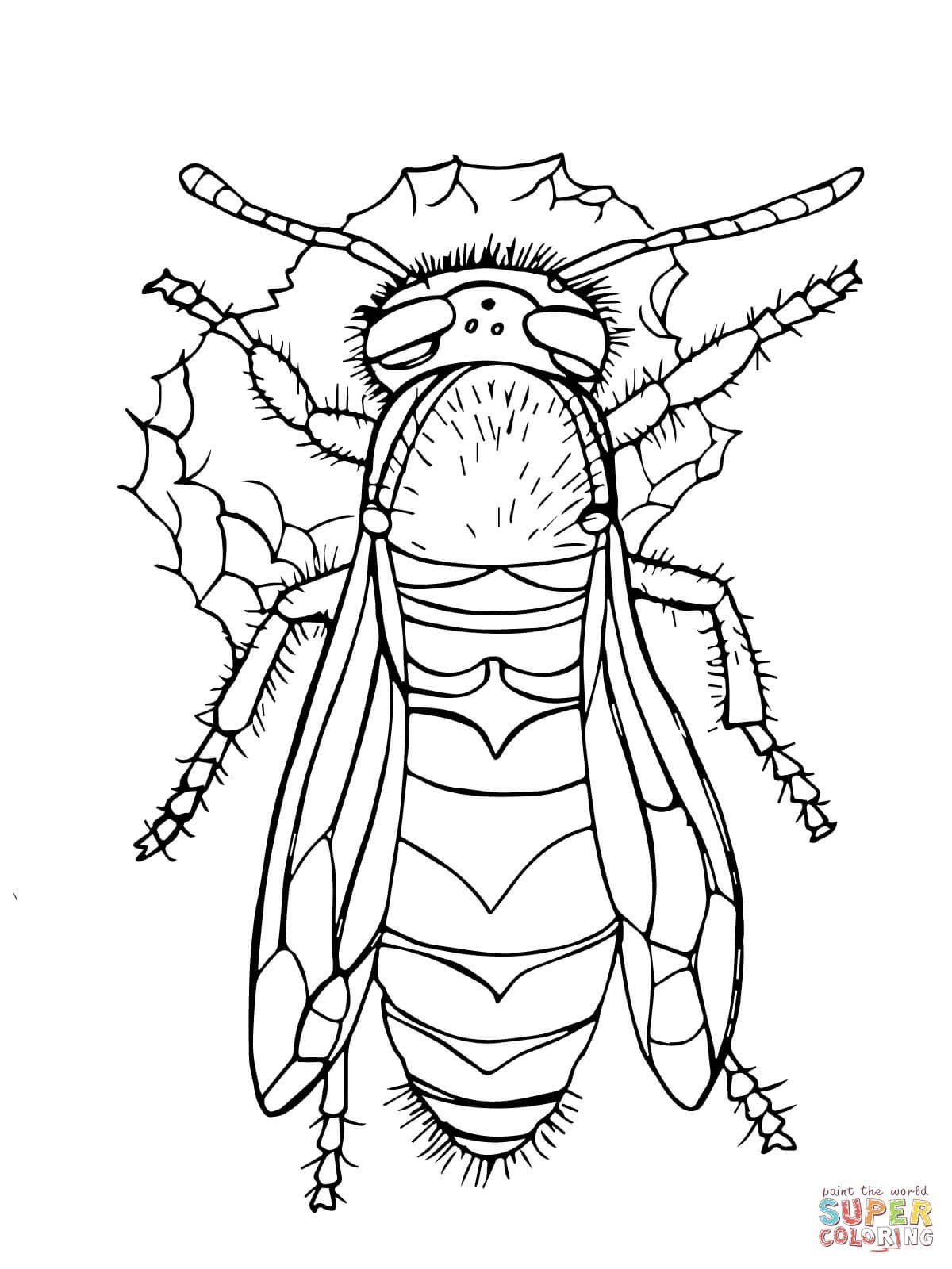 Ausmalbild: Europäische Wespe. Kategorien: Wespe
