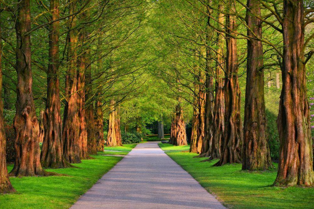 Buy Gadgets Online Green Nature Wood Images Landscape