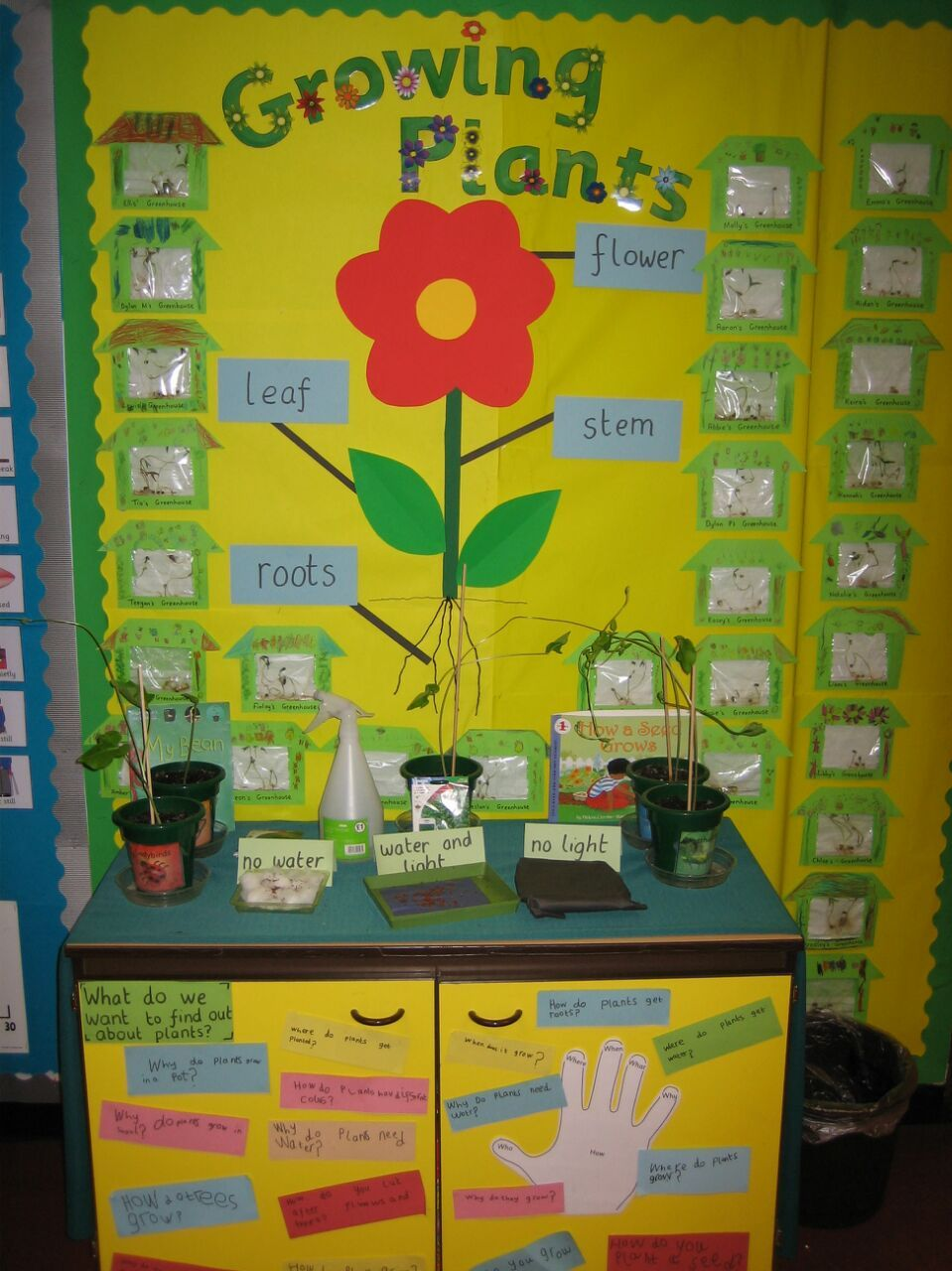 Y1 Science Display About Growing Plants Each Child