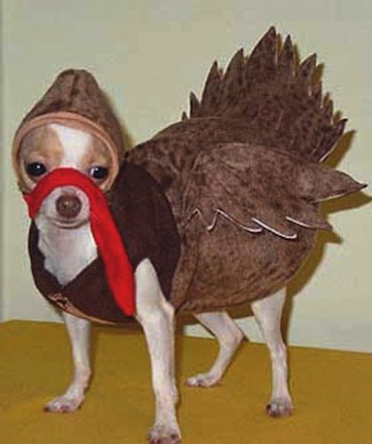 Image result for chihuahua costume