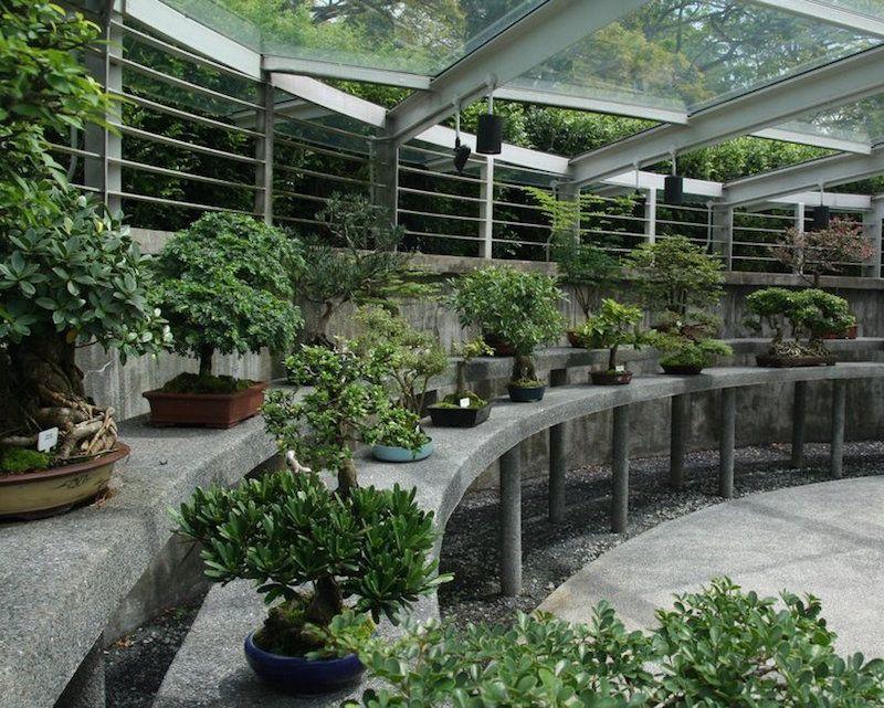 Bonsai garden Oakland, Aureliak