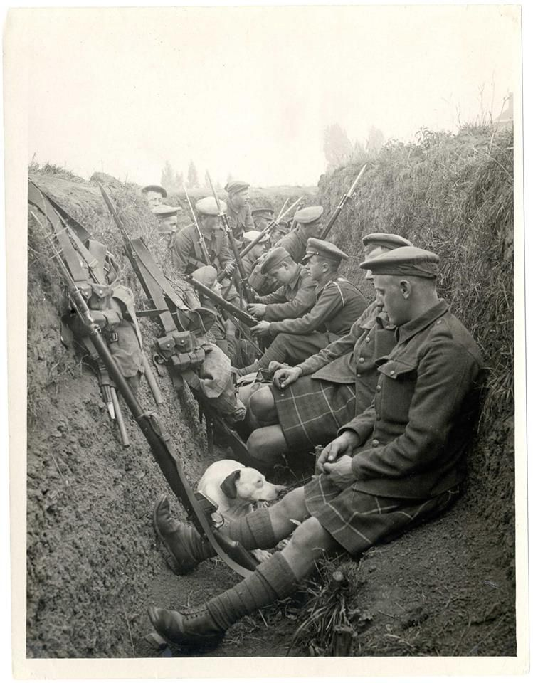 WW1: Scottish soldiers in a trench  Note the dog keeping company
