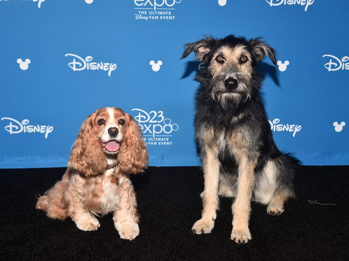 A Real Life Rescue Dog Was Chosen To Star In Disney S Lady And The