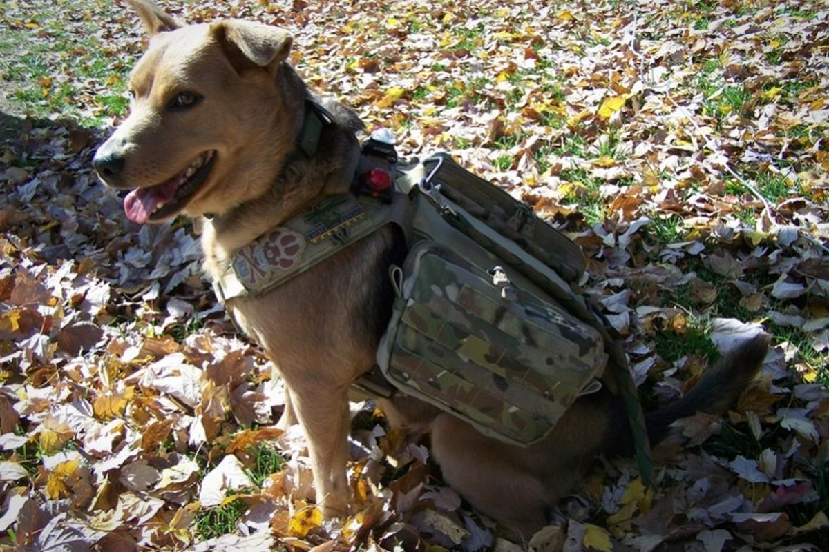 3485b078685eddfd36d6eab8ae8aaba6 tactical k9 harness bundle camping and other outdoors pinterest
