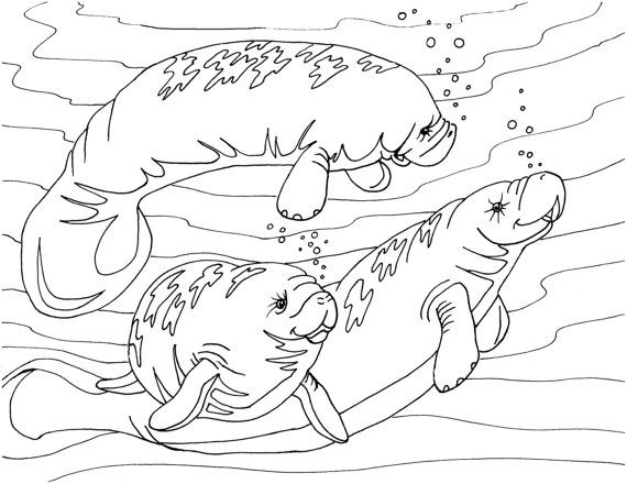 Manatees Coloring Page Adult Printable Coloring Pages Instant