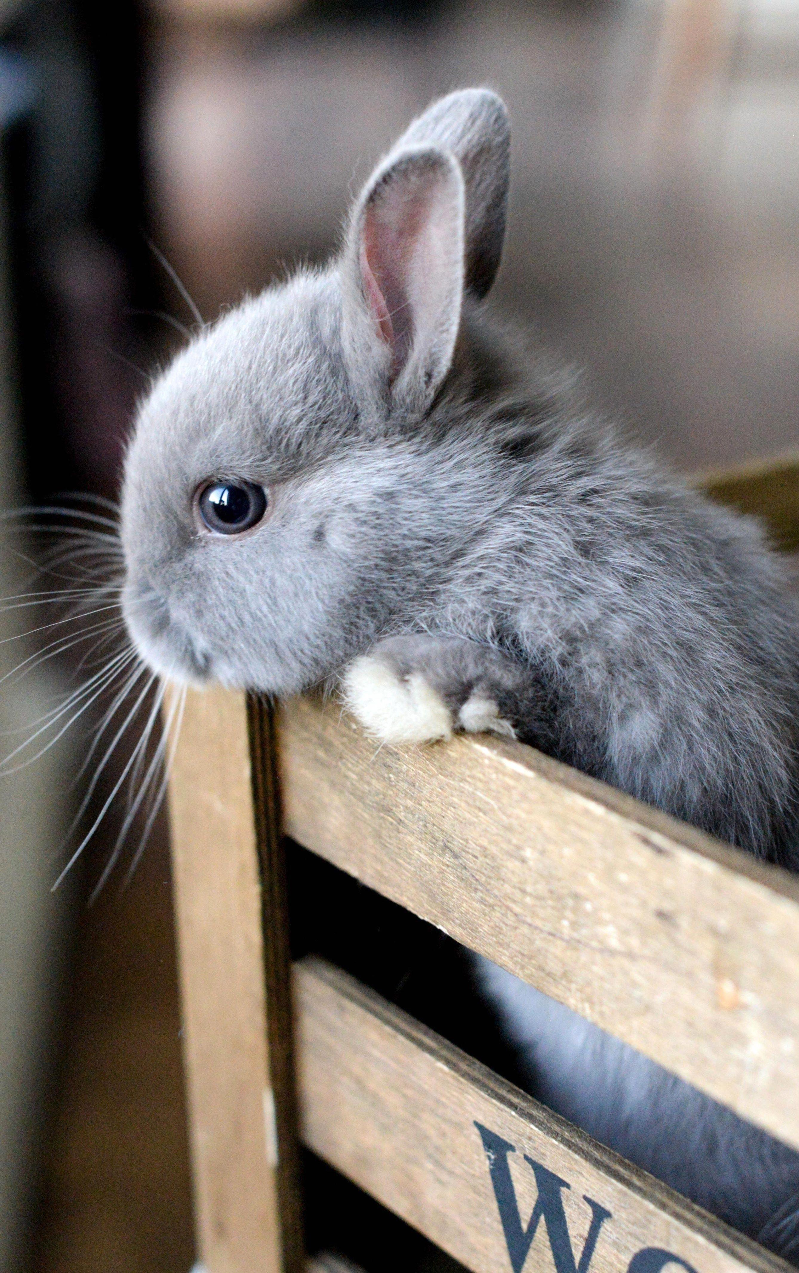 Картинки самых милых кроликов в мире