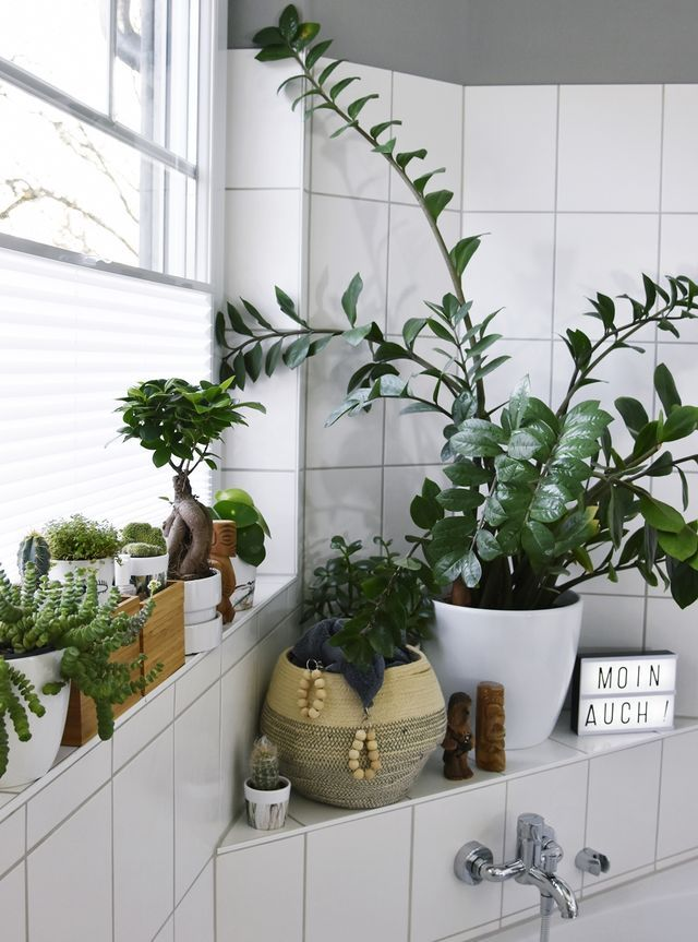Licht Für Den Urban Jungle Im Bad U2013 Kleines Badezimmer Makeover Mit Plissee  {enthält Werbung} (luziapimpinella)