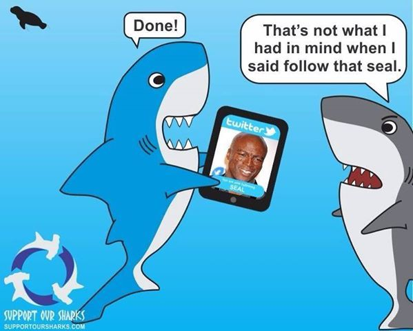 Shark Cartoon Sharks Funny Shark Shark Pictures