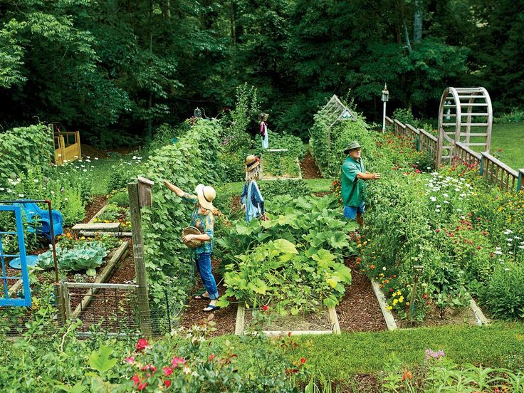Steal These Secrets for Growing Your Own Veggie Patch - Steal These Secrets for Growing Your Own Veggie Patch  Steal These Secrets for Growing Your Own Veggie Patch | When it comes to vegetable growing, Mary Alice and Terry Ramsey take a freewheeling approach in their North Carolina backyard.