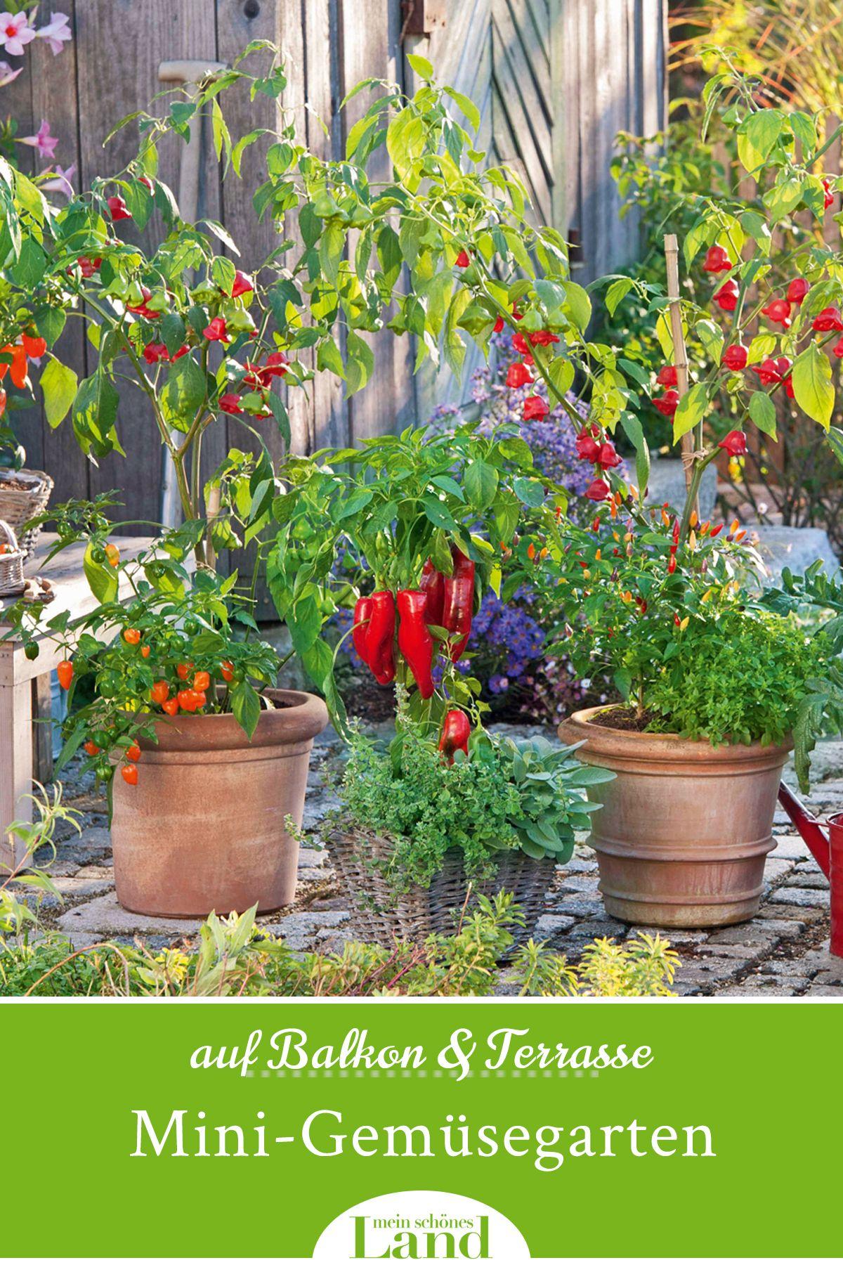 Mini Gemusegarten Anlegen Auf Balkon Terrasse Gemusegarten Anlegen Garten Gartentipps