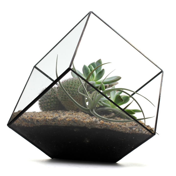 Large Cube Terrarium By Score + Solder Gallery