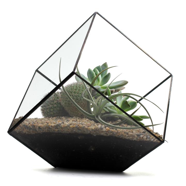 Large Cube Terrarium By Score + Solder Gallery