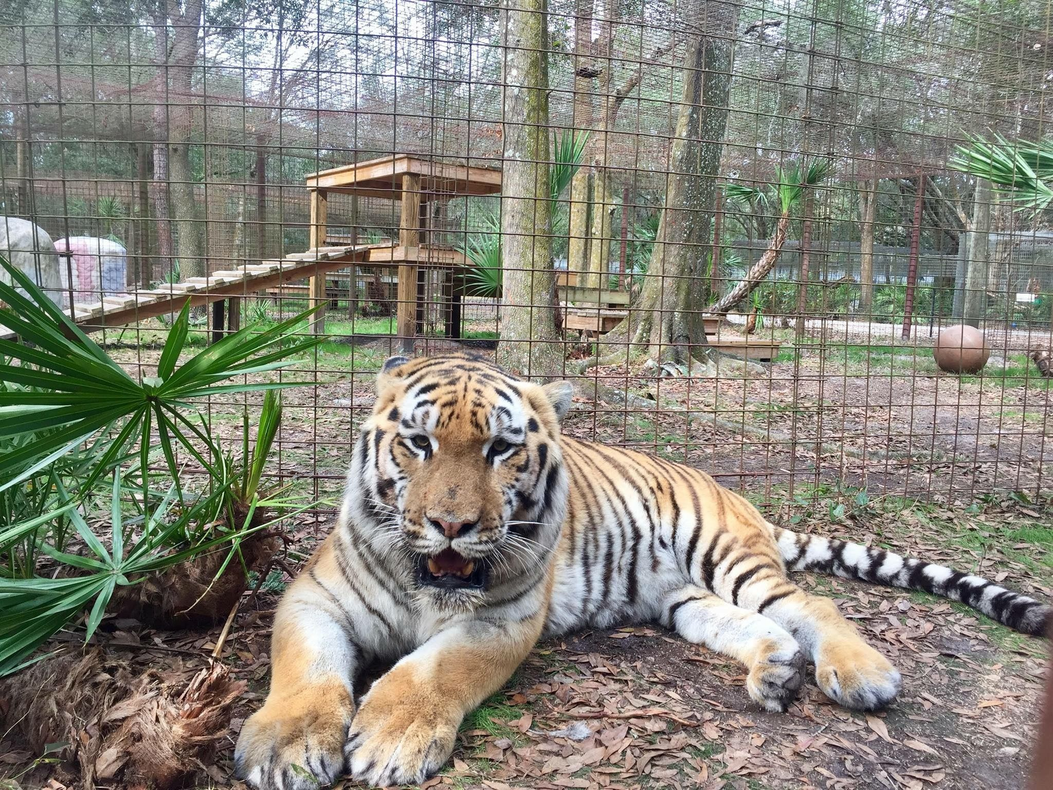 Pin by dusty moccasin on Big Cats Big cat rescue, Big