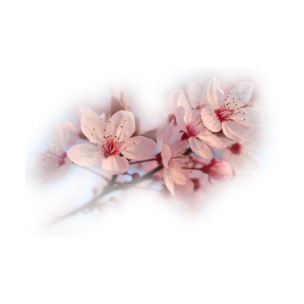 Fleurs non classées - - La Passion des tubes PSP ❤ liked on ...