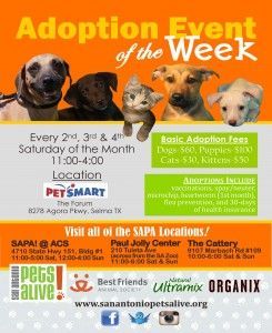 Weekly Adoption Events At Pestmar Forum Adoption Running Partner Cattery