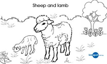Kids Colouring Sheep And Lamb Colouring Pages Sheep And Lamb Coloring For Kids Kids
