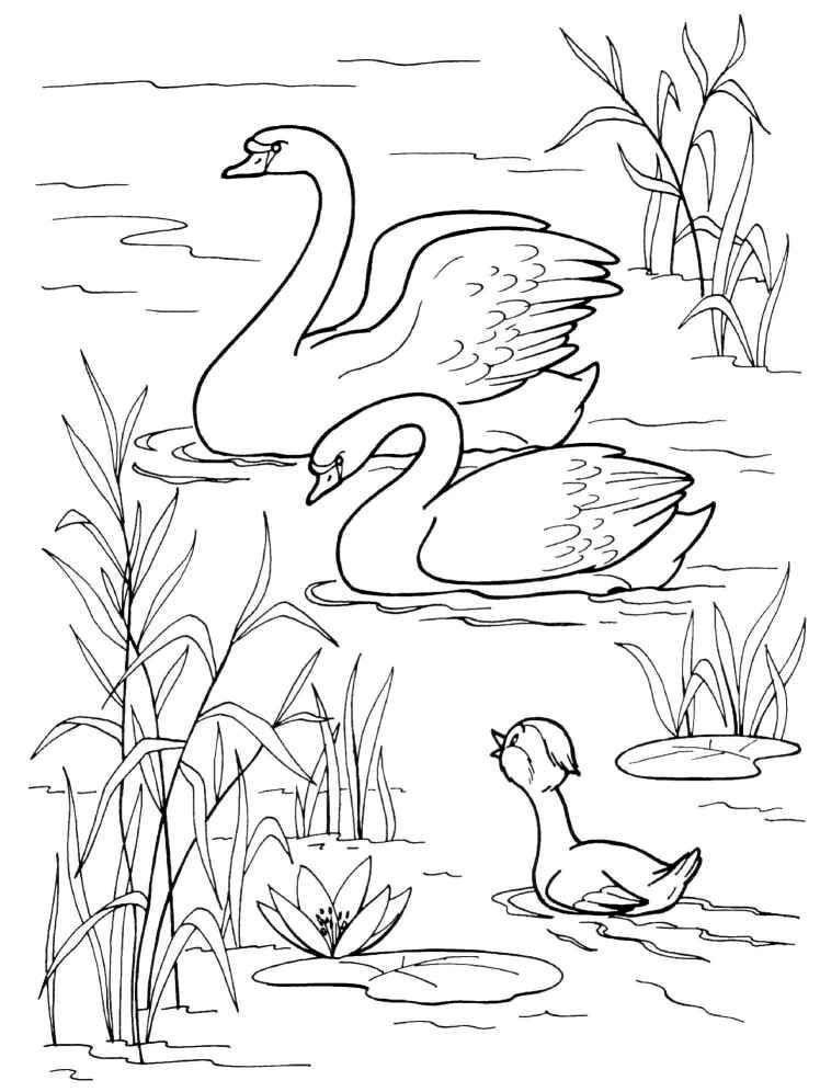 Раскраски — Гадкий утенок | Раскраски, Рисунок птиц ...