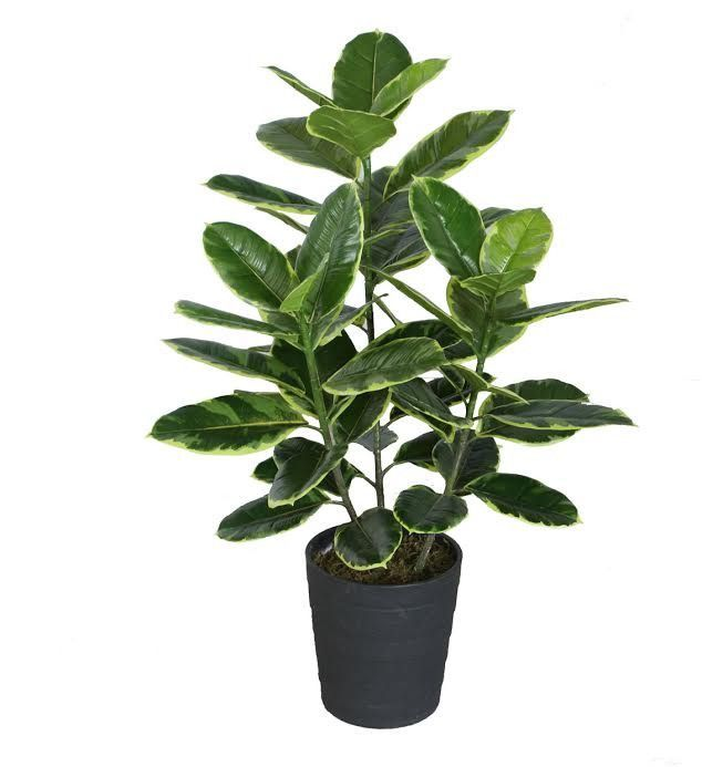 """36.5"""" Decorative Potted Artificial Green and White Rubber Plant"""