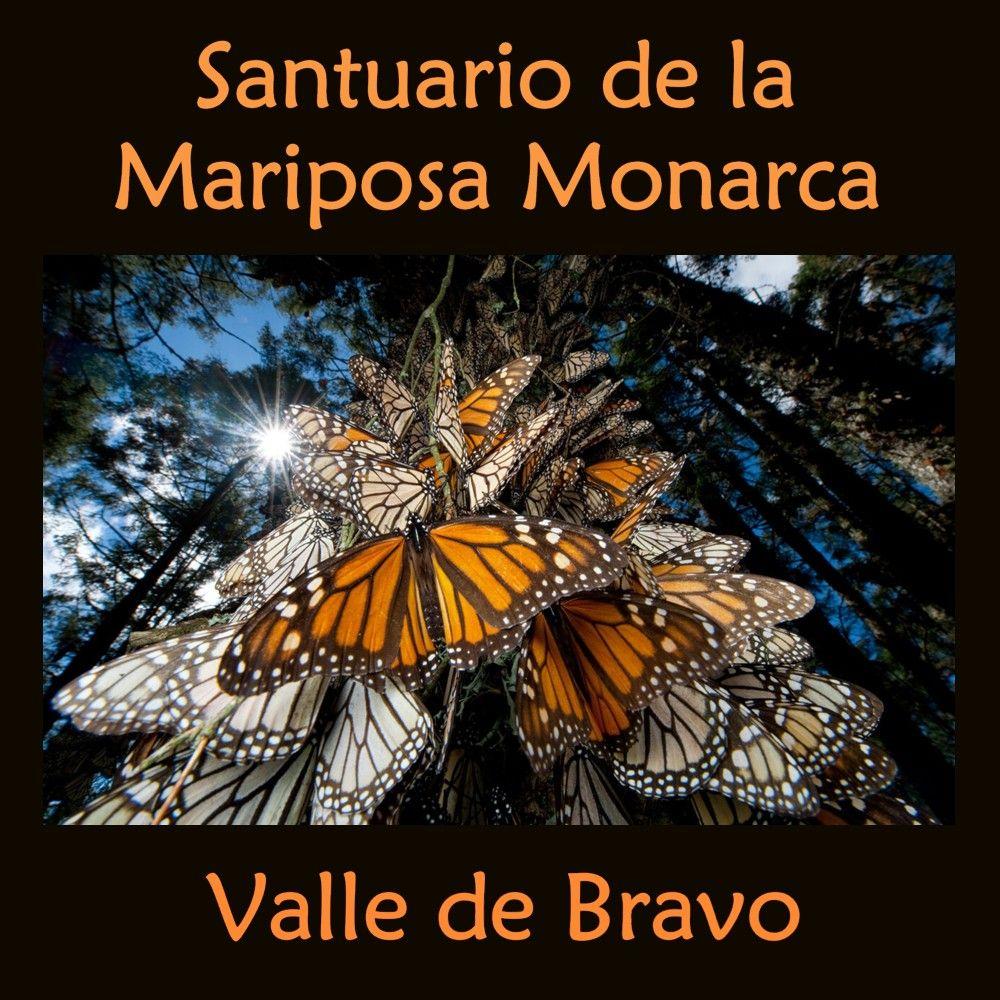 Excursiones Santuario De La Mariposa Monarca Valle De Bravo  # Muebles Valle De Bravo