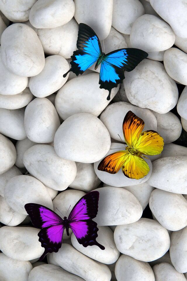 I Love It Mariposas Fondos De Pantalla Fondo De Pantalla De Ipad Fondos Mariposas
