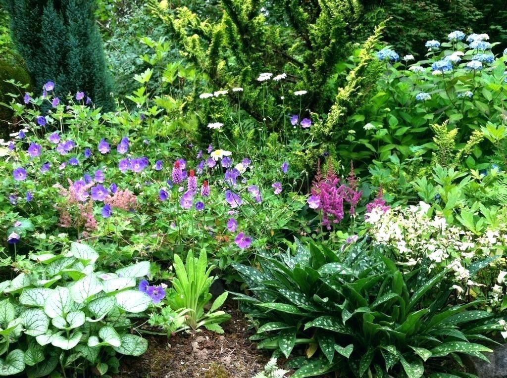 Alluring 90 Shade Garden Ideas Zone 6 Decorating Inspiration Of Best 25 Shade Garden Ideas On Pinterest Shad Shade Garden Plants Garden Shrubs Shade Garden