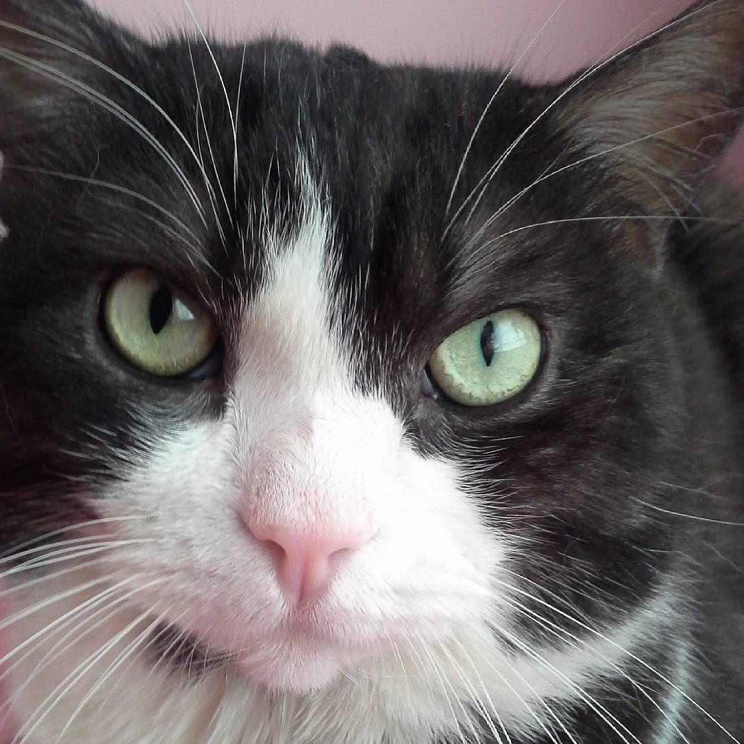 İyi geceler kedisi!.. kedi cat chat gato gatto katt