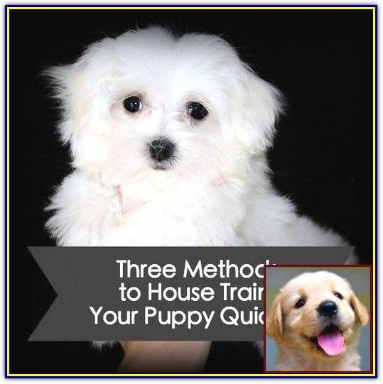 Effective And Easy Ways To Train Your Bad Dog Behavior In 2020 Dog Behavior Dog Behavior Problems Puppy Training