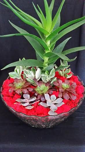 Living succulents terrarium  in a clear glass by UrbanSucculent, $153.00