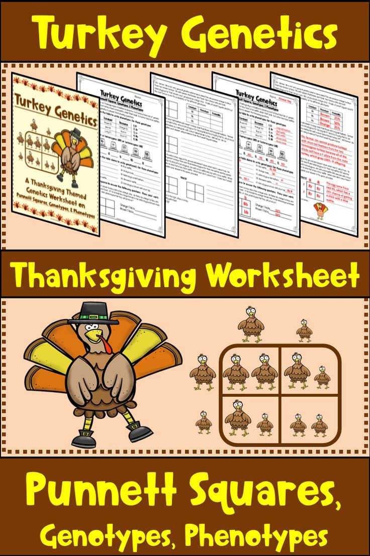 Thanksgiving Square Worksheet Turkey