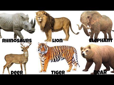 Zoo Animals Videos For Kindergarten