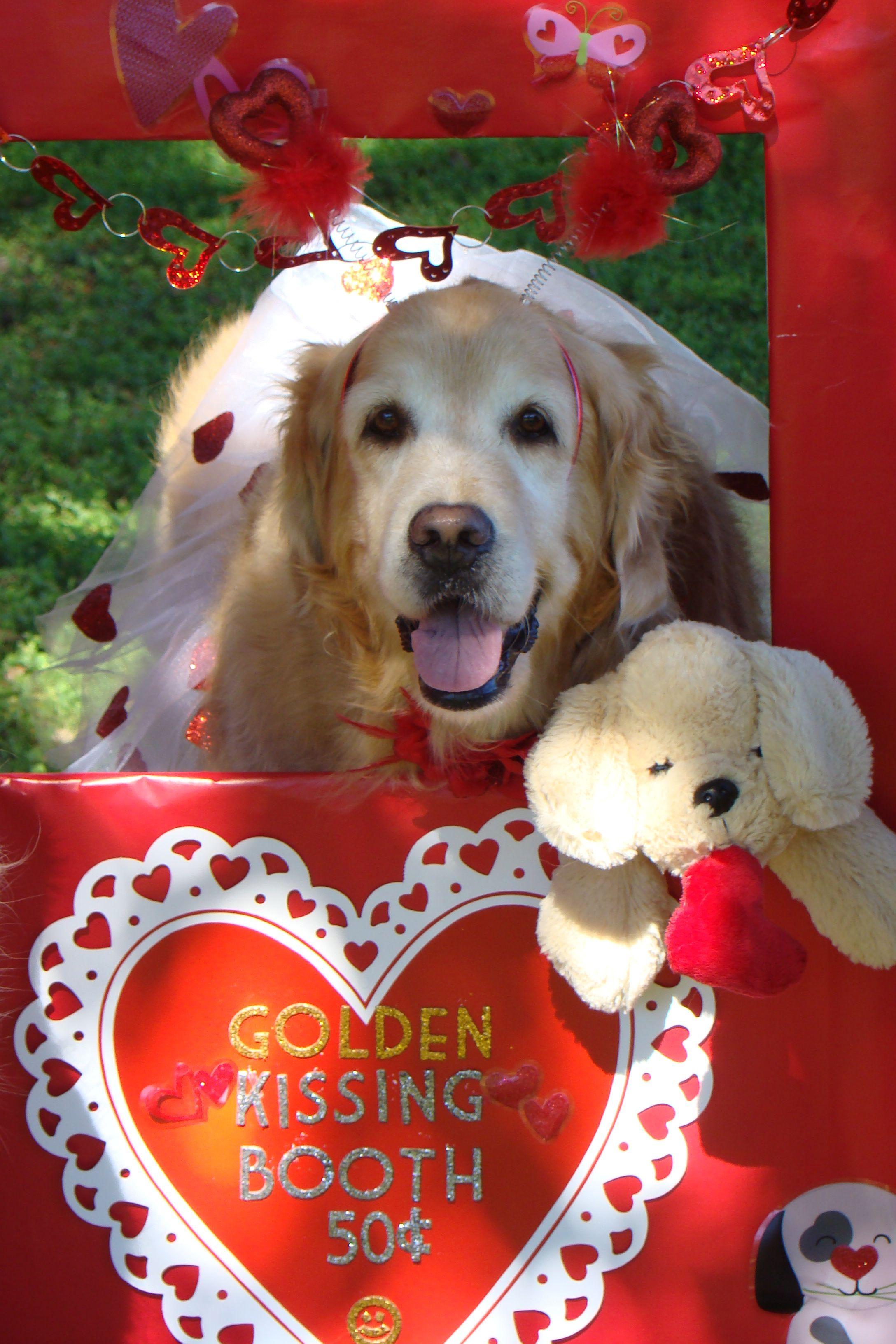 Golden Retriever Valentine Pictures