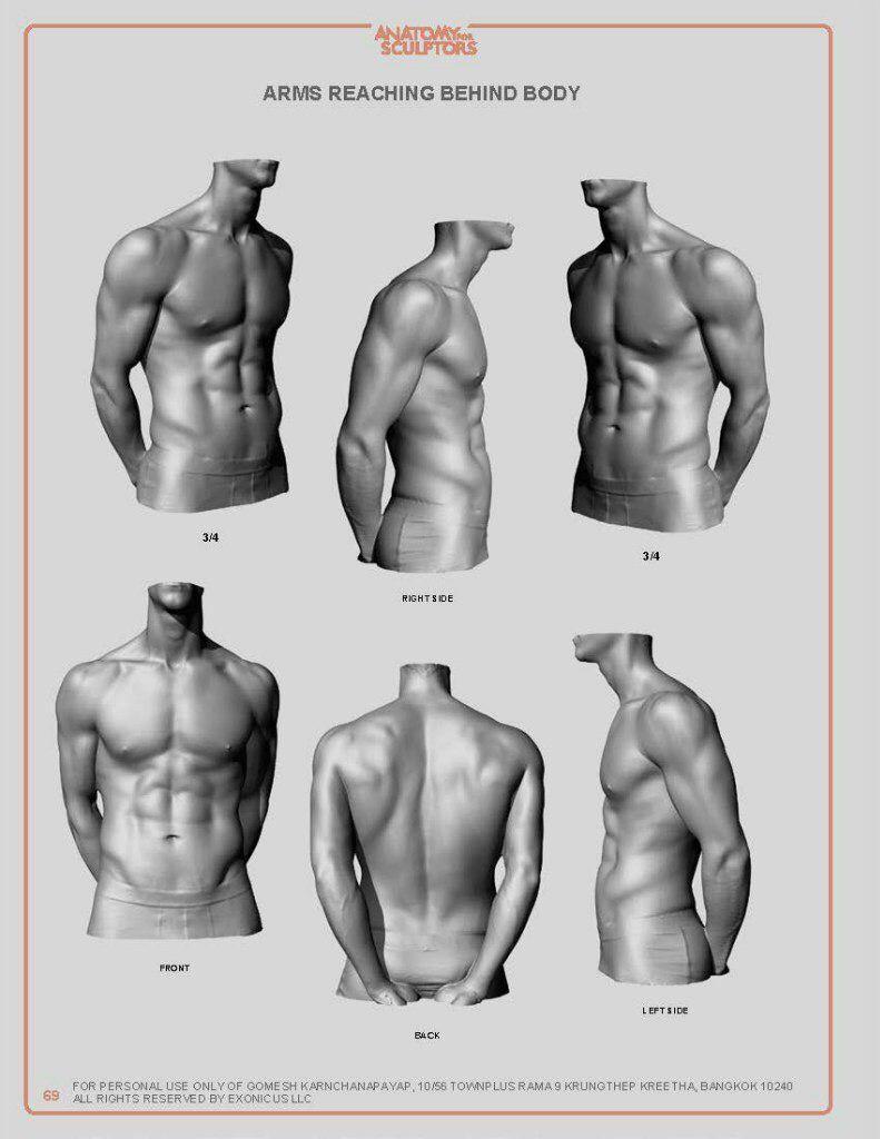 Pin von STACY LIUSHER auf anatomical drawing   Pinterest