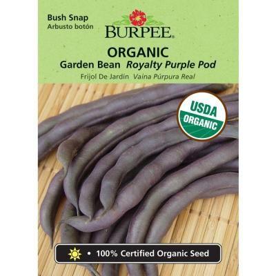recipe: bush bean seeds home depot [35]