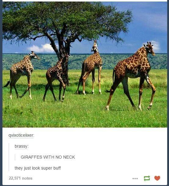 Giraffes with no necks