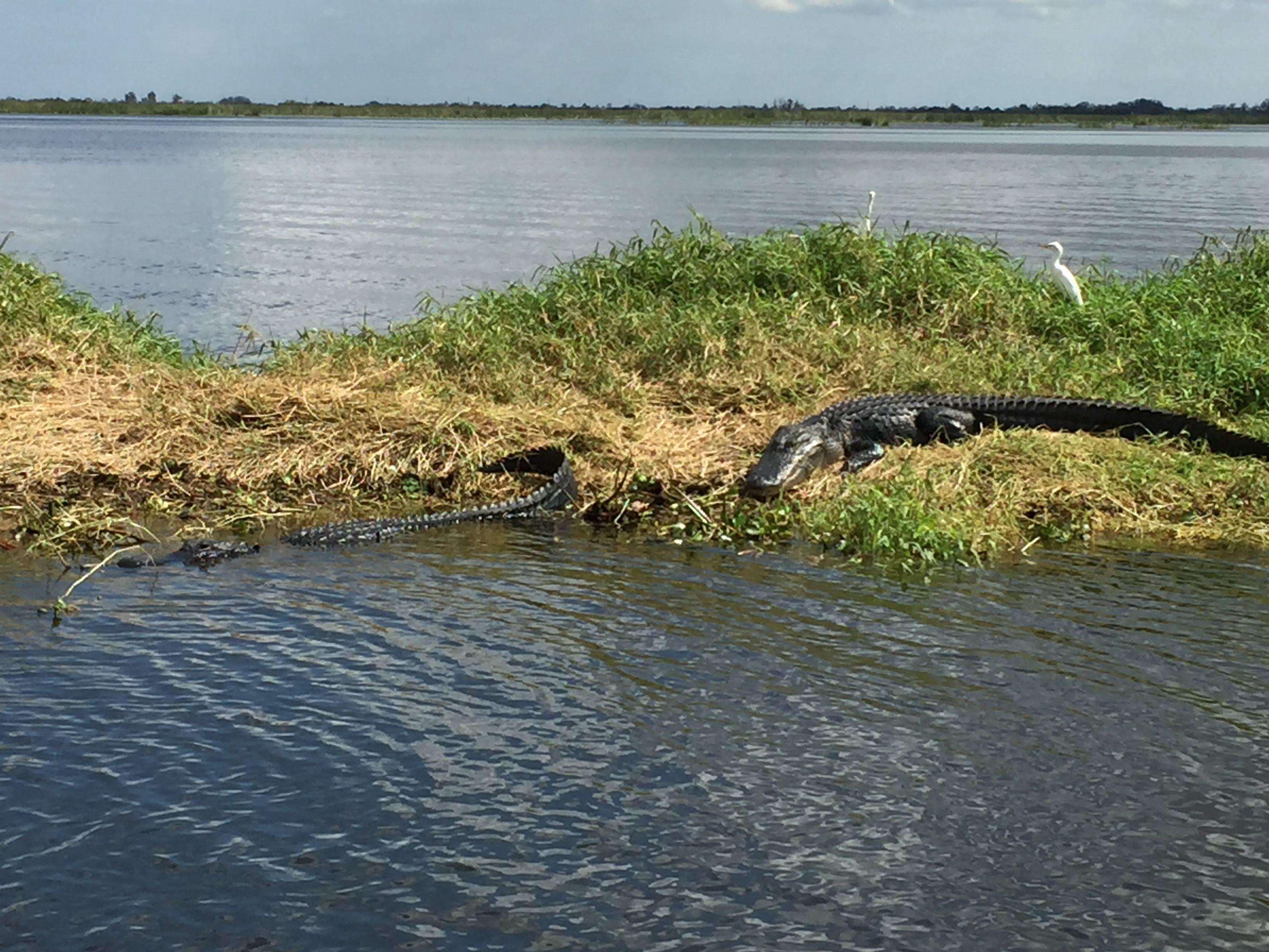 Gator vero florida rv destination outdoor river