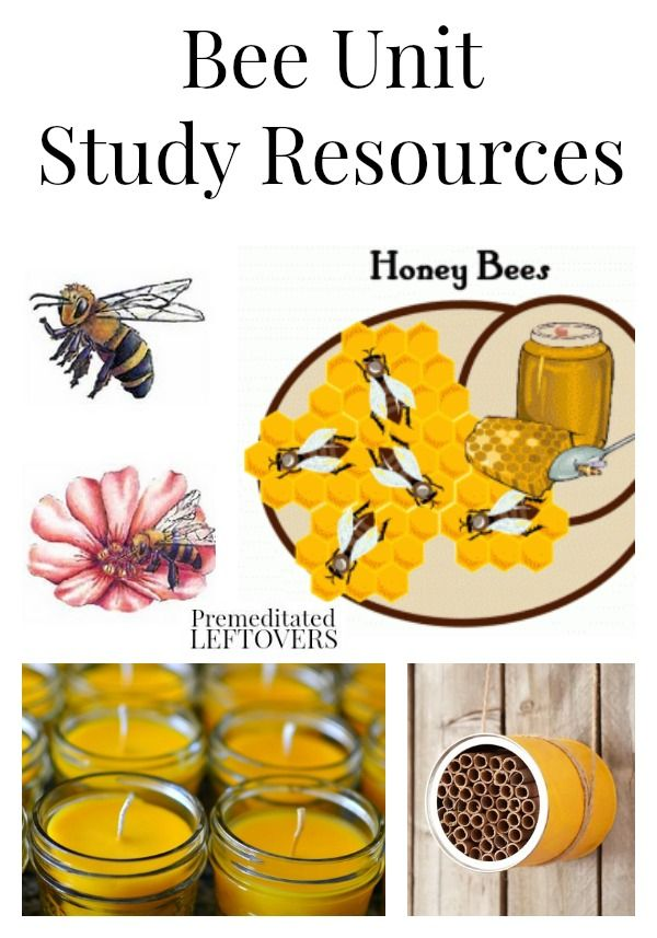 Bee Unit Study Resources including books about bees, bee ...