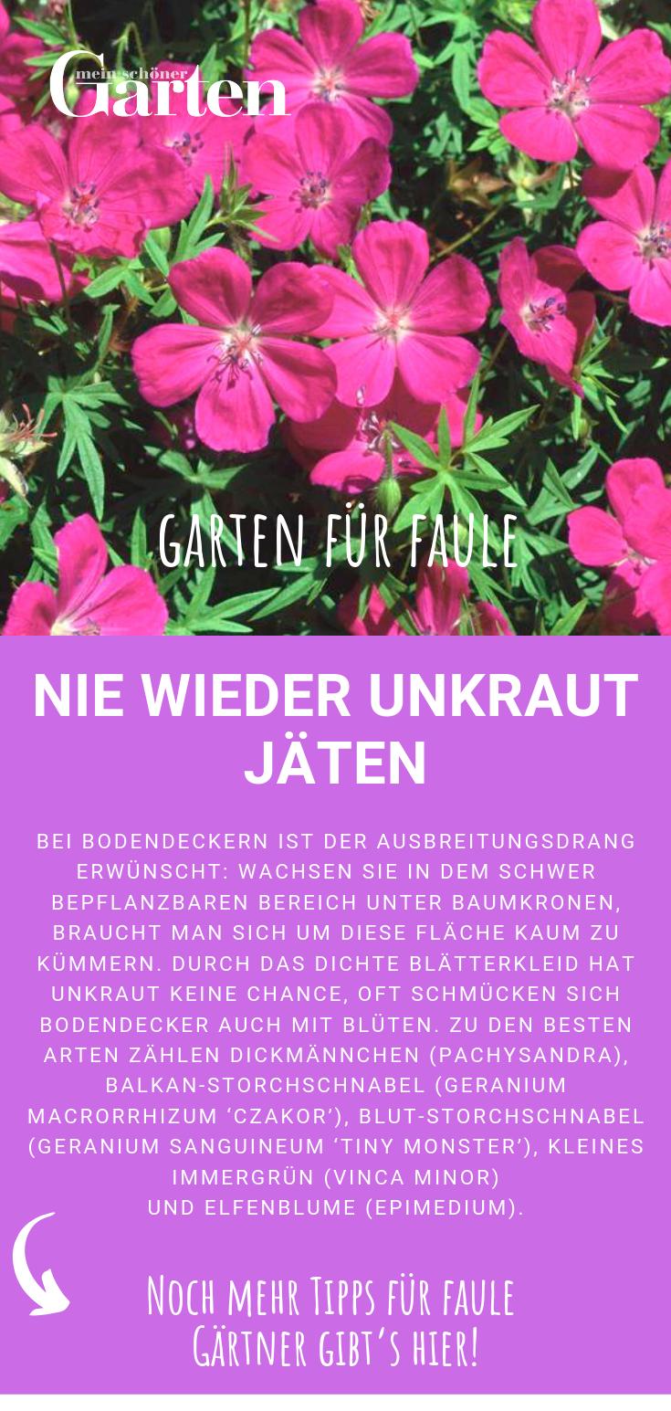 Garten für Faule: Nie wieder Unkraut jäten mit Bodendeckern