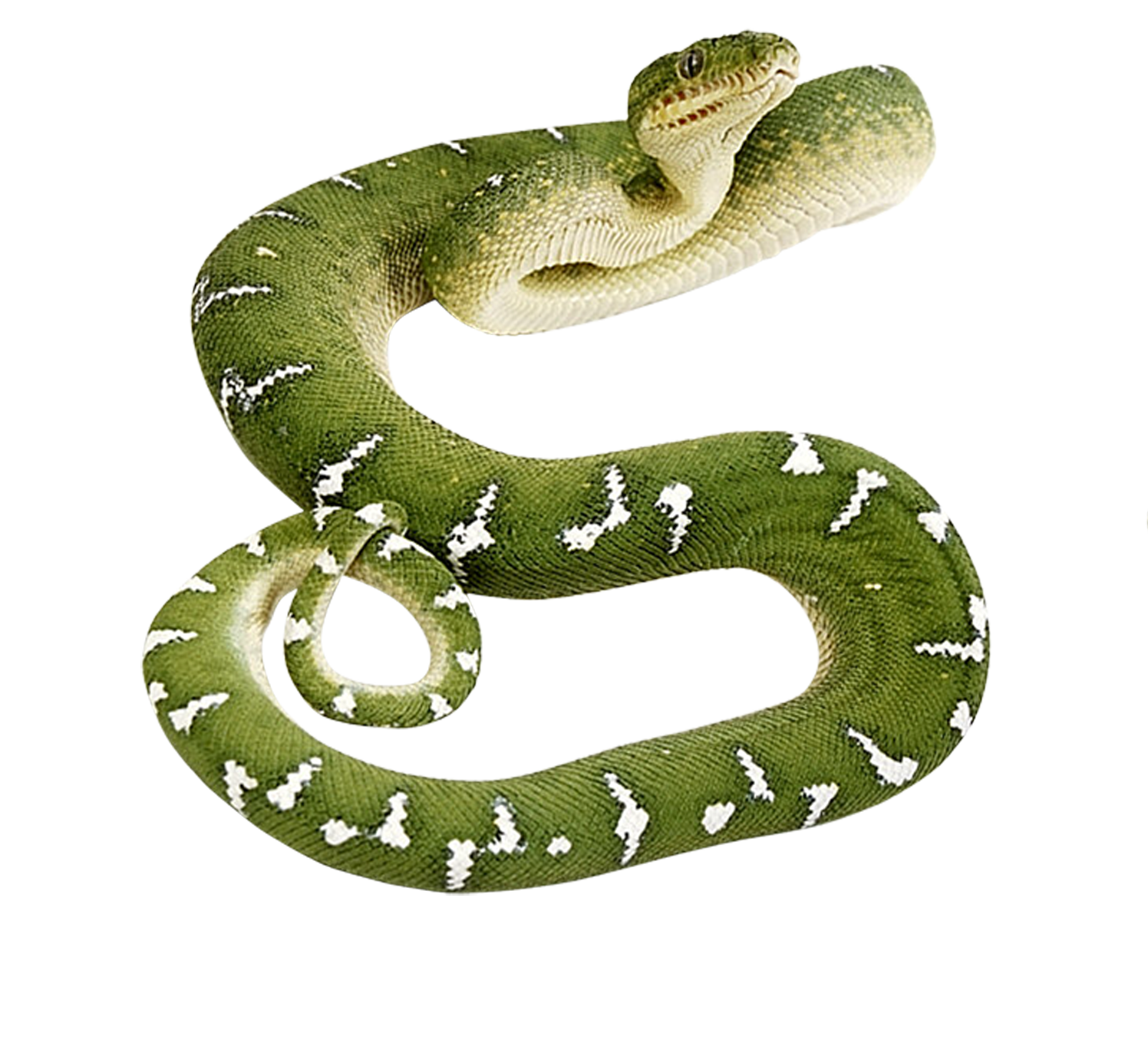 Pin By Veronica On Png Snake Png Image