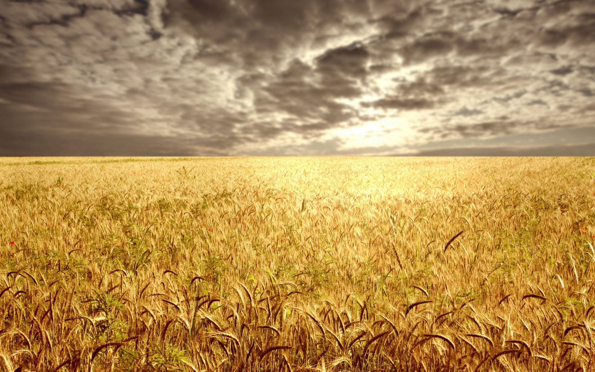 wheat field at the sunset vista s pinterest beautiful i am