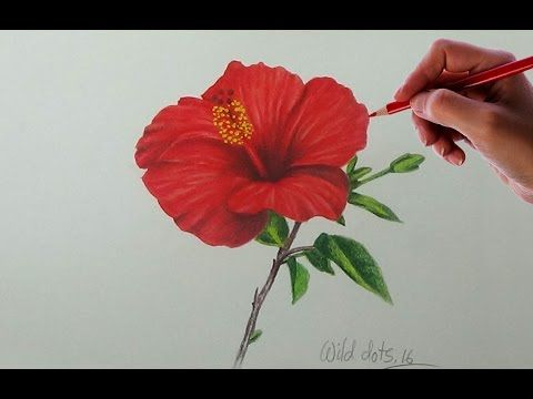 Drawing A Flower China Rose Easy And Simple Way Youtube