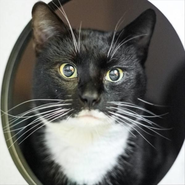 Hello I M Oreo I Ve Had A Bit Of A Tough Life So I D Like To Take It Slow And Get To Know You Properly Give Me A Little Time An With Images
