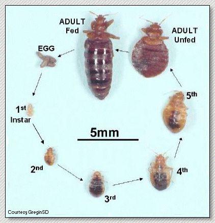 Pin Oleh Dinding 3d Di Pet Rid Of Bed Bugs Bed Bugs