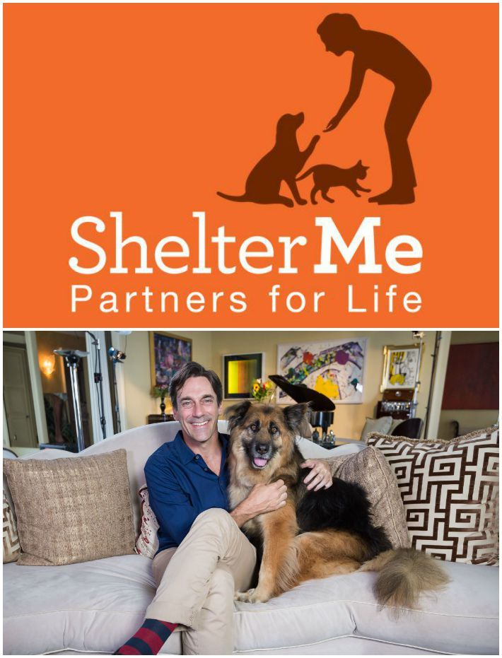 Shelter Me Partners for Life Shelter me, Therapy dogs, Life
