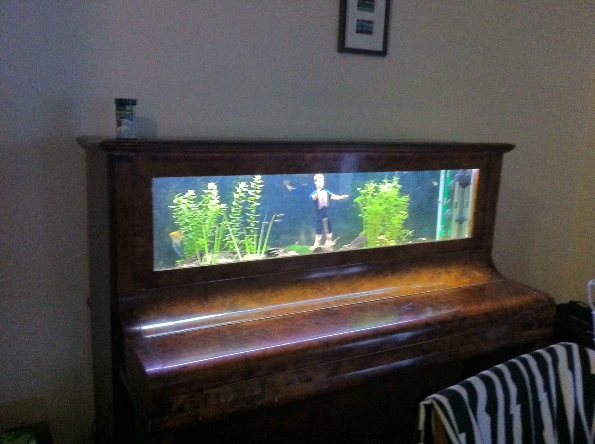 Piano fish tank Aquariums Pinterest