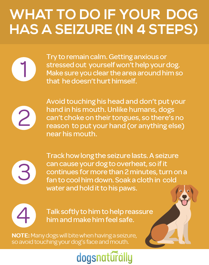 Seizures In Dogs Natural Options That Work Dogs Naturally Dog