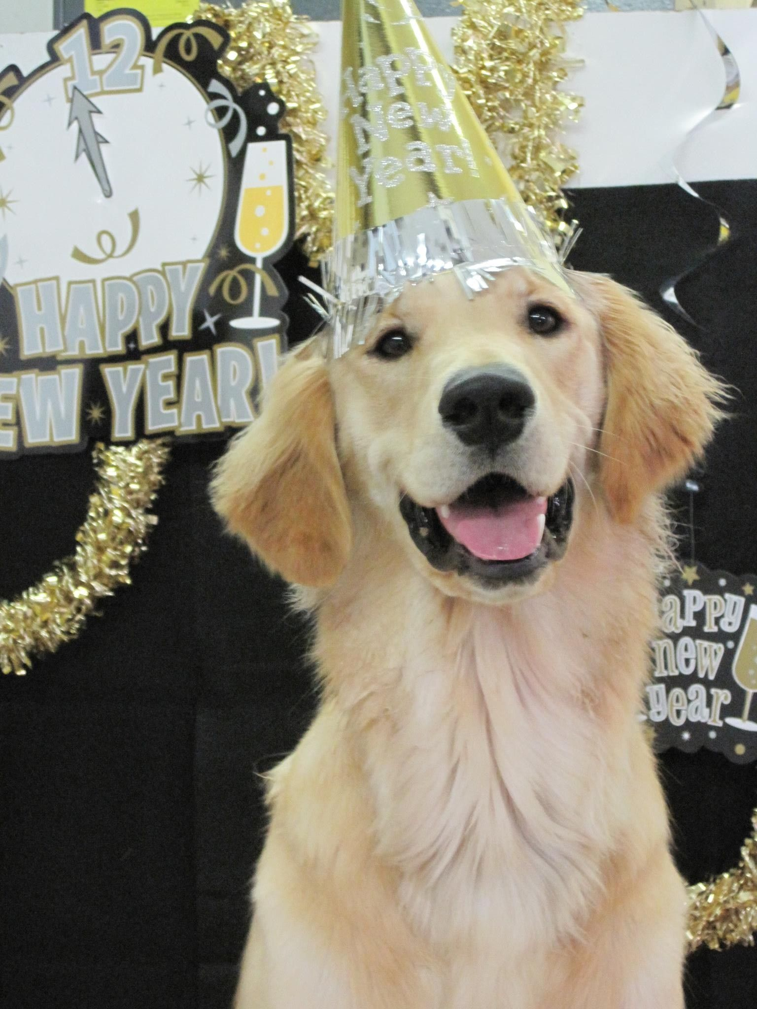 Happy New Year From The Happy Golden Dog Holiday Pictures Happy New Year Dog Pet Holiday